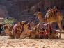 Petra, Dead Sea and Wadi Rum Shore Excursion Aqaba Port 3