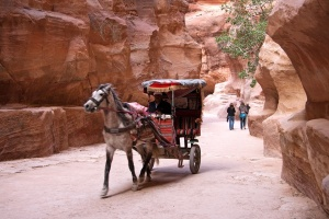 Horse Carriage in Petra 01
